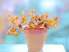 Mùa nắng http://www.metruyen.info/ Đà Lạt