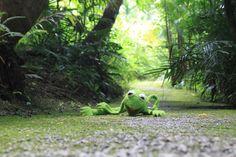 A nutili mě kolikrát celé dny chodit po lesích! To bych se na to vybodl...;)