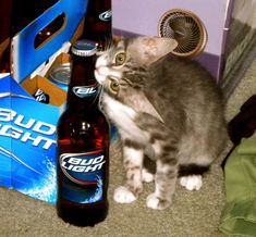 Community Post: 21 Cats Getting Drunk