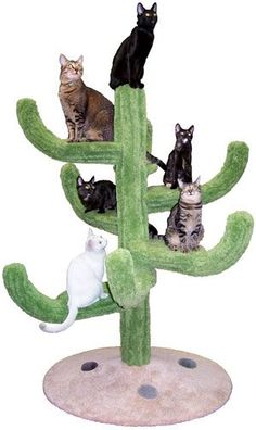 Cozy Cactus Cat Tree - Fun furniture, condos and climbing gyms for cats and kittens. Cat Tree Condo, Cat Condo, Cat Box Furniture, Cactus Cat, Cat Towers, Cat Climbing, Unique Cats, Cat Room, Cat Life