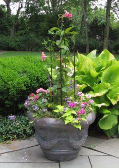Obelisk  plant frame / trellis w/ underplanting.  Cons. clematis, campanula, impatiens, geranium, lobellia, variegated ivy