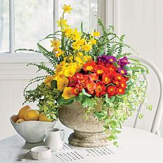 Primroses thrive in containers, either on the countertop or out on the patio.