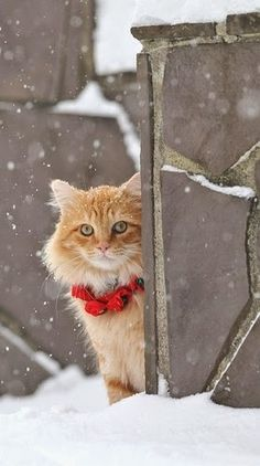 Cute Adorable Cat Photo Gallery: Christmas Cats #cats #Christmas