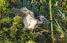 Focused On A Pile Landing by Bill And Deb Hayes