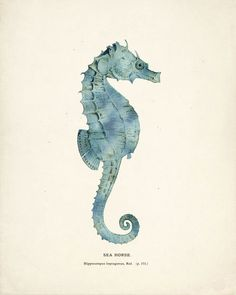 Antique Sea Horse Art Print 8x10 seafoam by vintagebytheshore, on Etsy