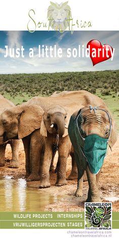 Student Volunteer, Gap Year, Africa Travel, South Africa, Dutch, Wildlife, How To Plan, Website, School
