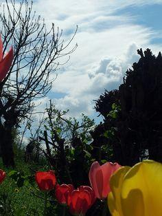nuvole e fiori