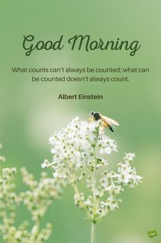 Good morning quote by Albert Einstein on picture with bee and flowers.