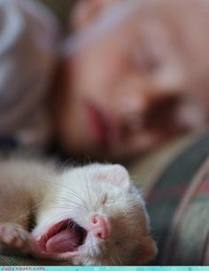 sleeping boy with his ferret.