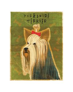 Yorkshire Terrier, this dog looks better than quite a few people I've seen!!