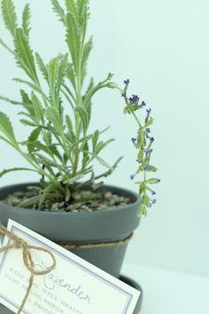 Julie Blanner KC Event and Wedding Planner | Entertaining Design DIY Home and Decorating Blog: DIY Lavender Pots