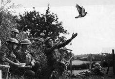 Cher Ami, a carrier pigeon during World War I.   The 24 Most Heroic Animals In History