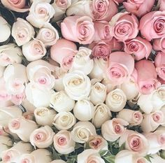 pink and white ombre roses - All Things Shabby and Beautiful