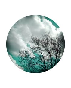 Aqua Blue Photography Tree Photograph Nature by ara133photography, $25.00
