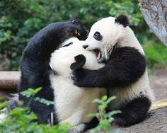 LOVE BITE   Flickr - Photo Sharing!