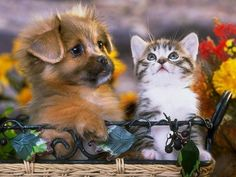 Image result for funny kittens and puppies by Alan and Sandy Carey
