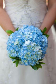 My wedding flowers - blue hydrangeas.