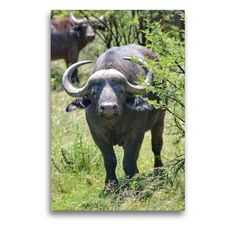 Artworks, Moose Art, Portraits, Wall Art, Animals, Color, Africa, Canvas, Animales