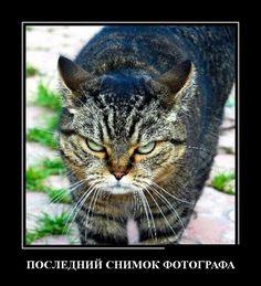 Васи.нет > Демотиваторы 01.03.2016 (30 фото)