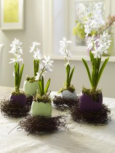 Easter table display ... miniature narcissis planted in broken died Easter eggs ... sweet ...