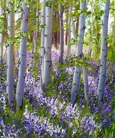 """Is to walk thru the Aspens in Spring ------McNeill's """"Brilliance of Lupine"""" is just one of her signature paintings of aspen trees. Landscape Art, Landscape Paintings, Paintings Of Trees, Painting & Drawing, Watercolor Paintings, Watercolors, Birch Tree Art, Aspen Trees, Pictures To Paint"""
