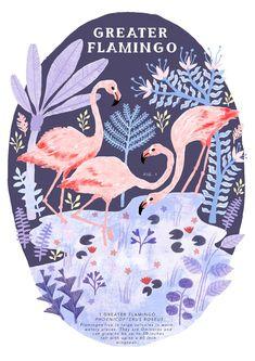 natural history flamingo illustration by Zanna Goldhawk