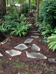 Stone pathway and ferns