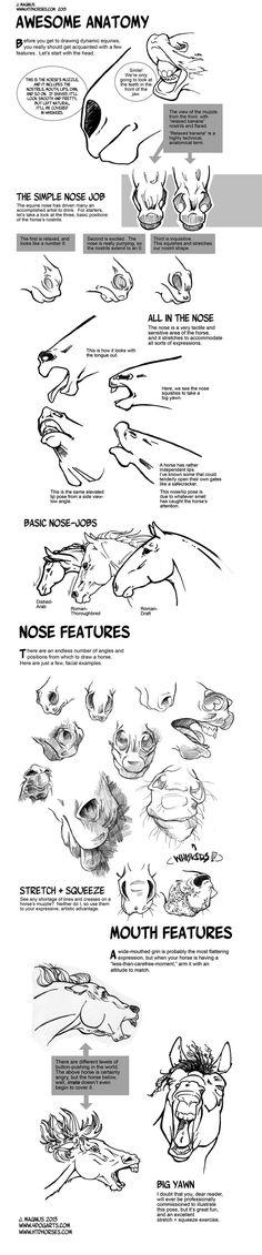 Horse Anatomy Part I by sketcherjak.devia... on @deviantART