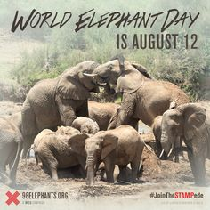 August 12 is World Elephant Day. Zoo Atlanta is a proud partner of the 96 Elephants campaign to stop the slaughter of elephants for ivory in Africa. Add your voice and #BeHerd!    #JoinTheSTAMPede