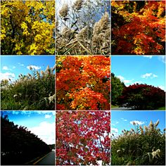 Weekly Photo Challenge: EXTRAORDINARY - We can see the extraordinary in the ordinary. We just need to open our eyes. | Mirth And Motivation #fallcolors #foliage #photography #nature #phototips