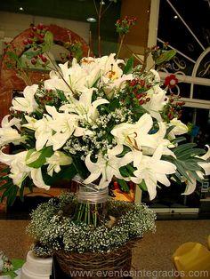 Lilum blancas