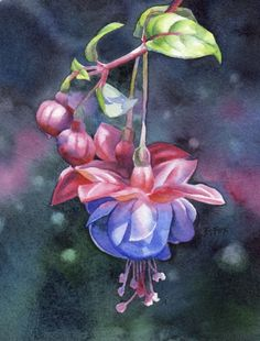 TALK OF DREAMS watercolor flower fuchsia painting, painting by artist Barbara Fox