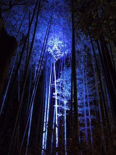 嵐山嵯峨野 竹林の小径