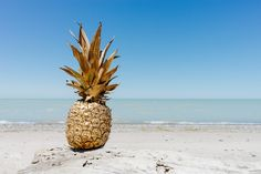 Sun, Beach & A Golden Pineapple Is All You Need ☀️ Escape The Cold And Go To The Beach 🏝 Come With Us ❤️