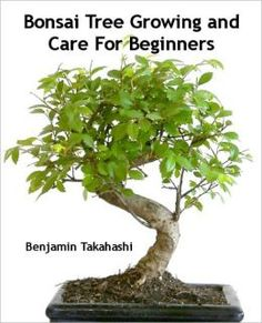 Bonsai Tree Growing and Care For Beginners