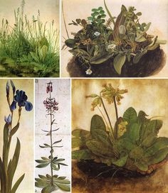 biologia-durer-piante.jpg (800×923)