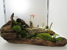 #盆栽 #bonsai art (Via: Minnie )なんか、もう世界観が出来上がってますね^^;こういう場合、中央の仙人みたいなフィギュアがいい役目を果たしますね。化粧砂にK砂をどうぞ。