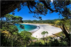 Medlands Beach on Great Barrier Island.a favorite spot I one day would like to return. New Zealand North, Joy Of Living, What A Wonderful World, Tropical Paradise, Beach Photos, Live Life, Wonders Of The World, Surfing, Australia
