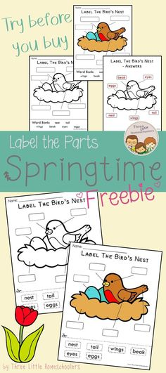 Try before you buy with this free preview of the Label the Parts: Spring set. Label the parts of a bird's nest in both a cut and paste and a word bank version. #freebie #labeling #labelingcenter #kindergarten #firstgrade #secondgrade #homeschool #bird #spring #springtime