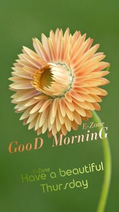 Good Morning Thursday, Good Afternoon, Thursday Images, Morning Inspiration, Morning Quotes, Beautiful