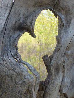 Rustic Heart Driftwood