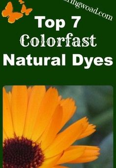 Not So Fugitive Natural Dyes: Top Seven Colorfast Natural Dyes. They are: Indigo, Woad, Walnut, Weld, Goldenrod, Cochineal, Madder