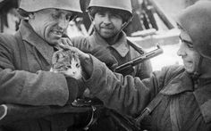 Soviet soldiers with a kitten in Stalingrad