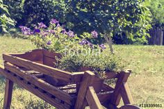 Wheelbarrow wooden decoration with fresh flowers petunia in a garden. Coloring and processing photos with soft focus