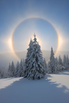 Halo and Snow Covered Trees, Fichtelberg, Ore Mountains, Saxony, Germany - 600-06038303 � Martin Ruegner Model Release: No Property Release: No Halo and Snow Covered Trees, Fichtelberg, Ore Mountains, Saxony, Germany