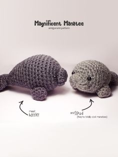 Manatee Cover photo