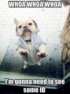 Haha  Body guard dog