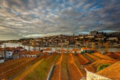 Roofs - Overlooking the beautiful city of Porto, through the roofs of Oporto Wine Caves