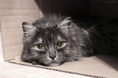 Aquí puedes descargar gratis esta imagen de un bonito gato dentro de una caja de cartón. Descarga cientos de imágenes totalmente gratis en nuestras categorí http://imagenesgratis.eu/imagen-de-un-gato-dentro-de-una-caja-de-carton/