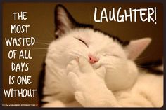 Animal humor | Cute cat | Laughter | Smile | Live it up | 7 days a week | Enjoy life: The most wasted of all days is one without laughter.  Hoping your day is filled with oodles of joy and an abundance of LAUGHTER.